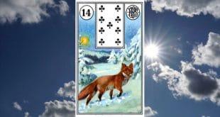 Carta zingara 14: la volpe Scopri i significati della carta